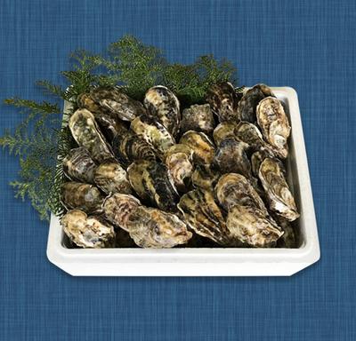 殻付き牡蠣(加熱用) 3キロ(約40個〜45個)(軍手、ナイフ付)