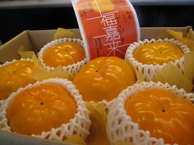 【送料込み】大玉!福嘉来(太天柿) 6玉(化粧箱)