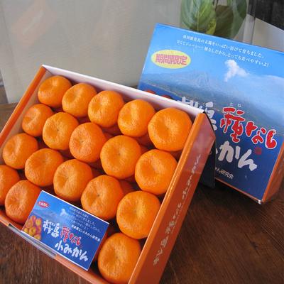 【送料込み】種なし桜島小みかん 40粒(化粧箱)