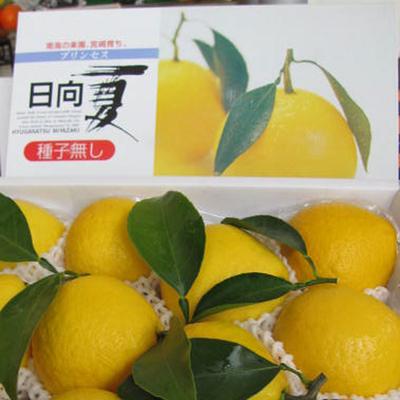 【送料込み】種なし 日向夏 2.5kg 10~12玉(化粧箱)