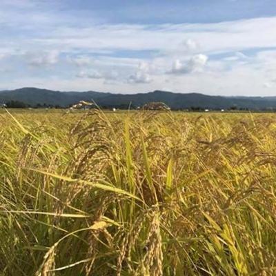 斎藤農園 自然栽培米コシヒカリ