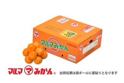 【特選】樹熟採取みかん (品種:青島)2Lサイズ5kg