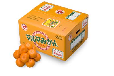【テスト用のため購入不可】樹熟採取みかん(品種:青島)【青秀】Lサイズ5kg