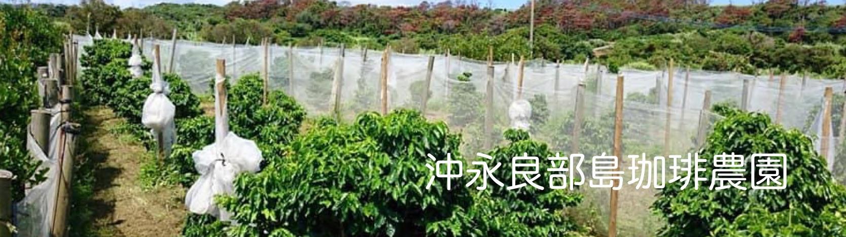沖永良部島珈琲農園