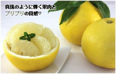 ★パール柑 3L 8玉入【販売終了】