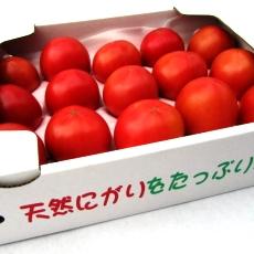 隔離ベット栽培 天然にがりトマト