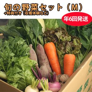 CSA(地域支援型農業)版 野菜セット(M) 年6回発送