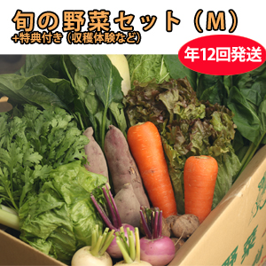CSA(地域支援型農業)版 野菜セット(M) 年12回発送