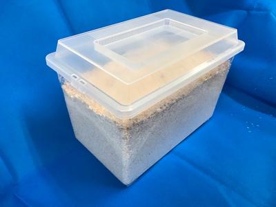 ■菌床産卵ボックス(材入り)
