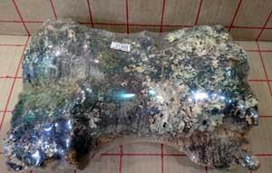 バージンコルク片7 size25x15cm