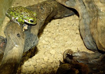 カエル飼育用の土(ソイル)