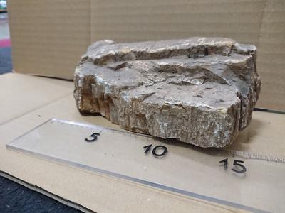 木化石 4