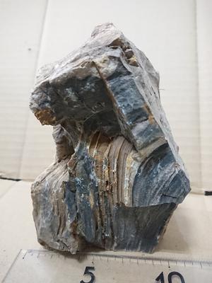 木化石 8