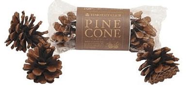 PINE CONE(パインコーン)