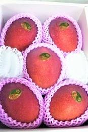 【特A級】贈答用完熟アップルマンゴー2kg(TA2) 送料無料