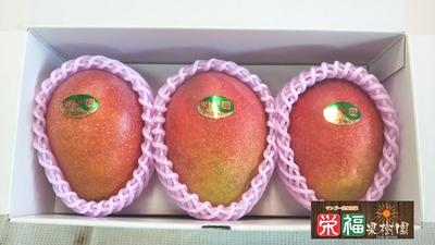 贈答用完熟アップルマンゴー1kg(A1) 送料無料