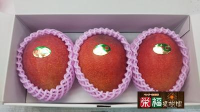 【特A級】贈答用完熟アップルマンゴー1kg(TA1) 送料無料