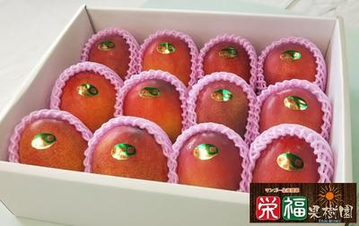贈答用完熟アップルマンゴー4kg (A4) 送料無料