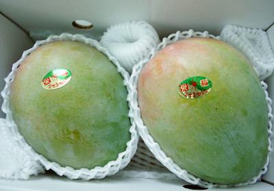 【化粧箱入贈答用】キーツマンゴー2玉入り1.5kg 送料無料