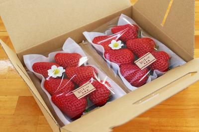 【極選 完熟いちご】紅ほっぺ レギュラーサイズ(8個入・10個入・12個入)