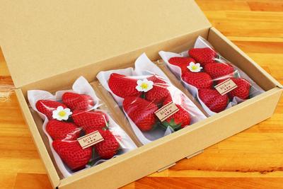 【極選 完熟いちご】紅ほっぺ レギュラーサイズ(12個入・14個入・16個入・18個入)