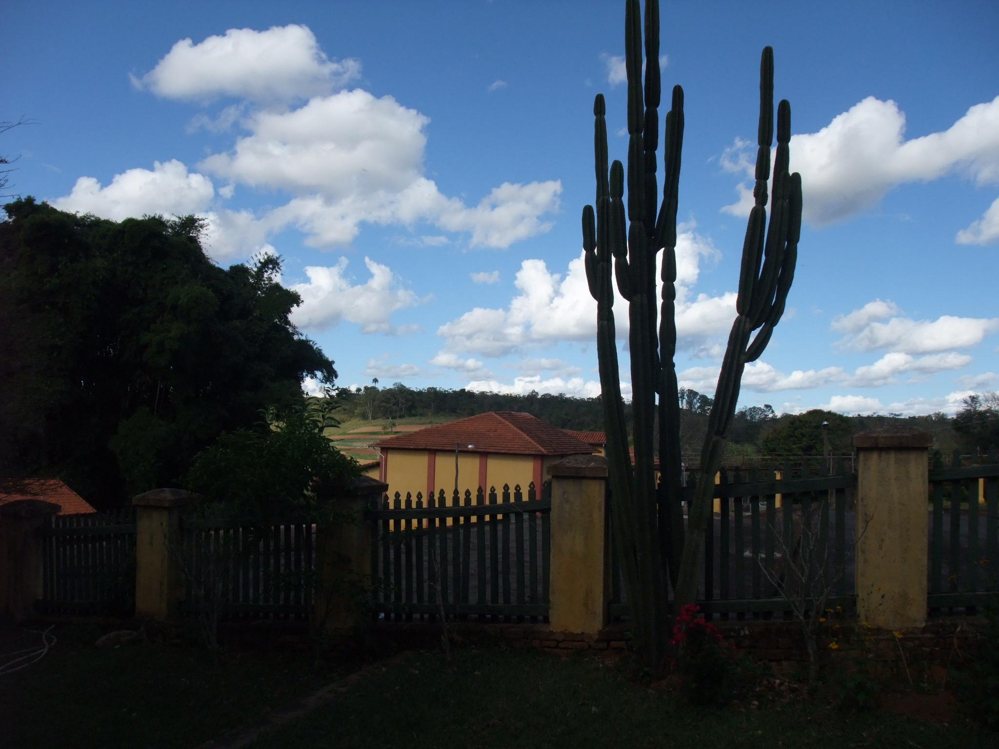 最初に訪れたブラジルの農園