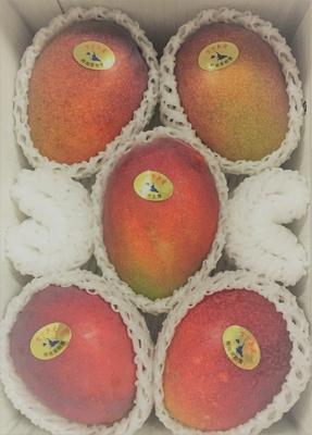宮古島産マンゴー 良品2kg(白箱入)