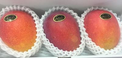 宮古島産マンゴー 良品1kg(白箱入)
