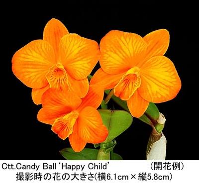 Ctt.Candy Ball'Happy Child'(カトリアンセ キャンディー ボール'ハッピー チャイルド')