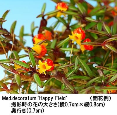 Med.decoratum'Happy Field'(メディオカルカ- デコラタム'ハッピー フィールド')