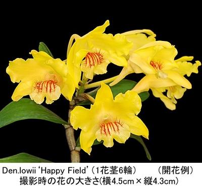 Den.lowii(selectionבHappy Field'BM/JOGA)(ローウィー)
