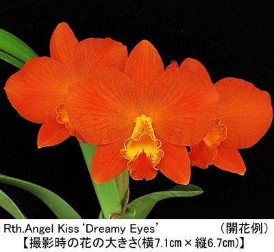 Rth.Angel Kiss'Dreamy Eyes'(エンジェル キス'ドリーミー アイズ)