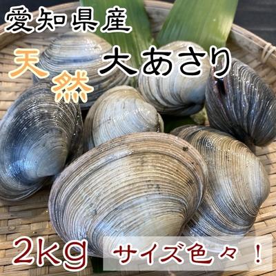 天然大あさり 2kg サイズ色々【師崎漁港から直送】