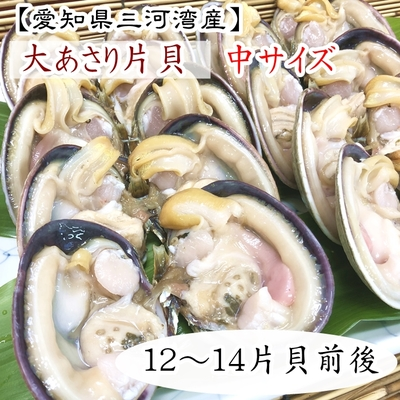 天然大あさり片貝12〜14片貝前後 中サイズ