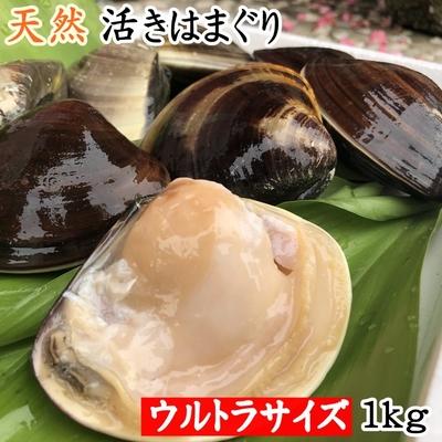 【愛知県産】天然活きはまぐり 幻のウルトラサイズ 1kg