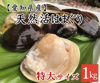 【愛知県産】国産 天然活きはまぐり (特大サイズ) 10個前後 1Kg
