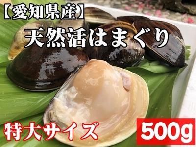 【愛知県産】国産 天然活きはまぐり(特大サイズ) 5個前後 500g