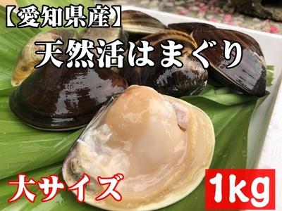 【愛知県産】国産 天然活はまぐり (大サイズ) 1kg 12個前後