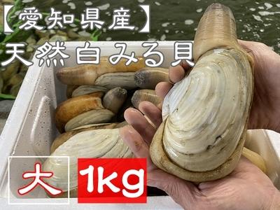 【愛知県三河湾産】 天然活き白みる貝 (大サイズ) 1kg