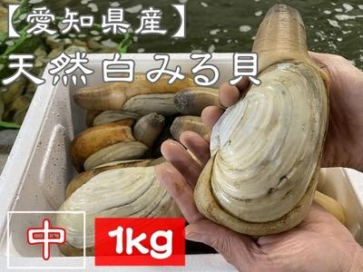 【愛知県三河湾産】 天然活き白みる貝 (中サイズ) 1kg