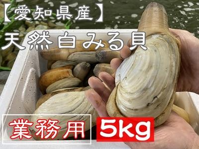 【愛知県三河湾産】天然活き白みる貝 業務用5kg