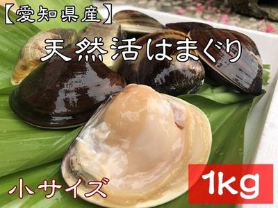 【愛知県産】 天然活はまぐり (小サイズ) 28個前後 1kg