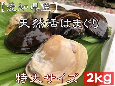 【愛知県産】【お得!】  天然活はまぐり (特大) 2kg