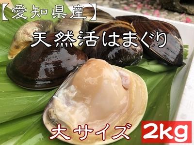 お買い得 【愛知県産】天然活はまぐり (大サイズ) 24個前後 2kg
