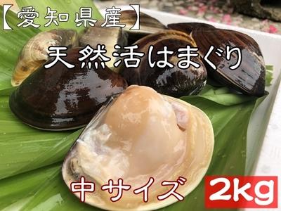 お買い得! 【愛知県産】 天然活はまぐり (中サイズ) 36個前後 2kg