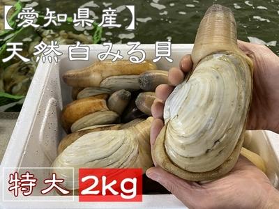 お買い得! 【愛知県産】 天然活白みる貝 (特大サイズ) 2kg