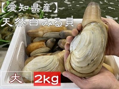 お買い得! 【愛知県産】 天然活白みる貝 (大サイズ) 2kg