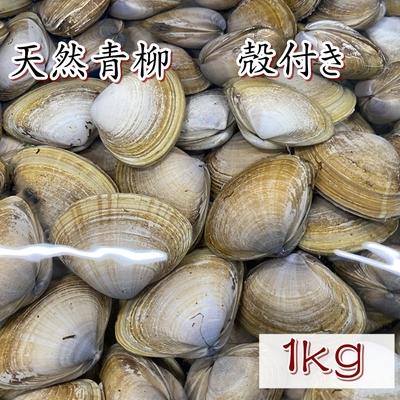 天然青柳(バカ貝)殻付き 1kg