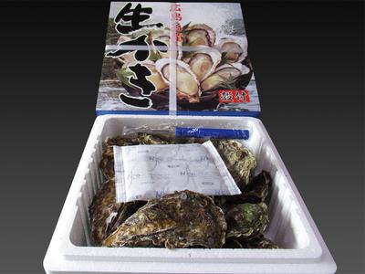 広島県産 殻付生かき 約20個