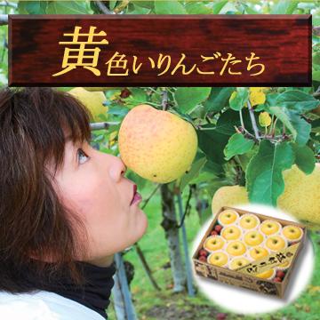 黄色いりんごたち